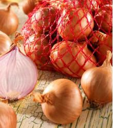 Cibule šalotka Red Sun - Allium Cepa - prodej cibulek - 250 g